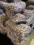 Картофель семенной сорт Гала