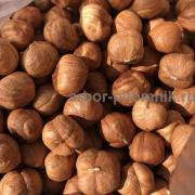 Саженцы фундука из питомника растений Арбор